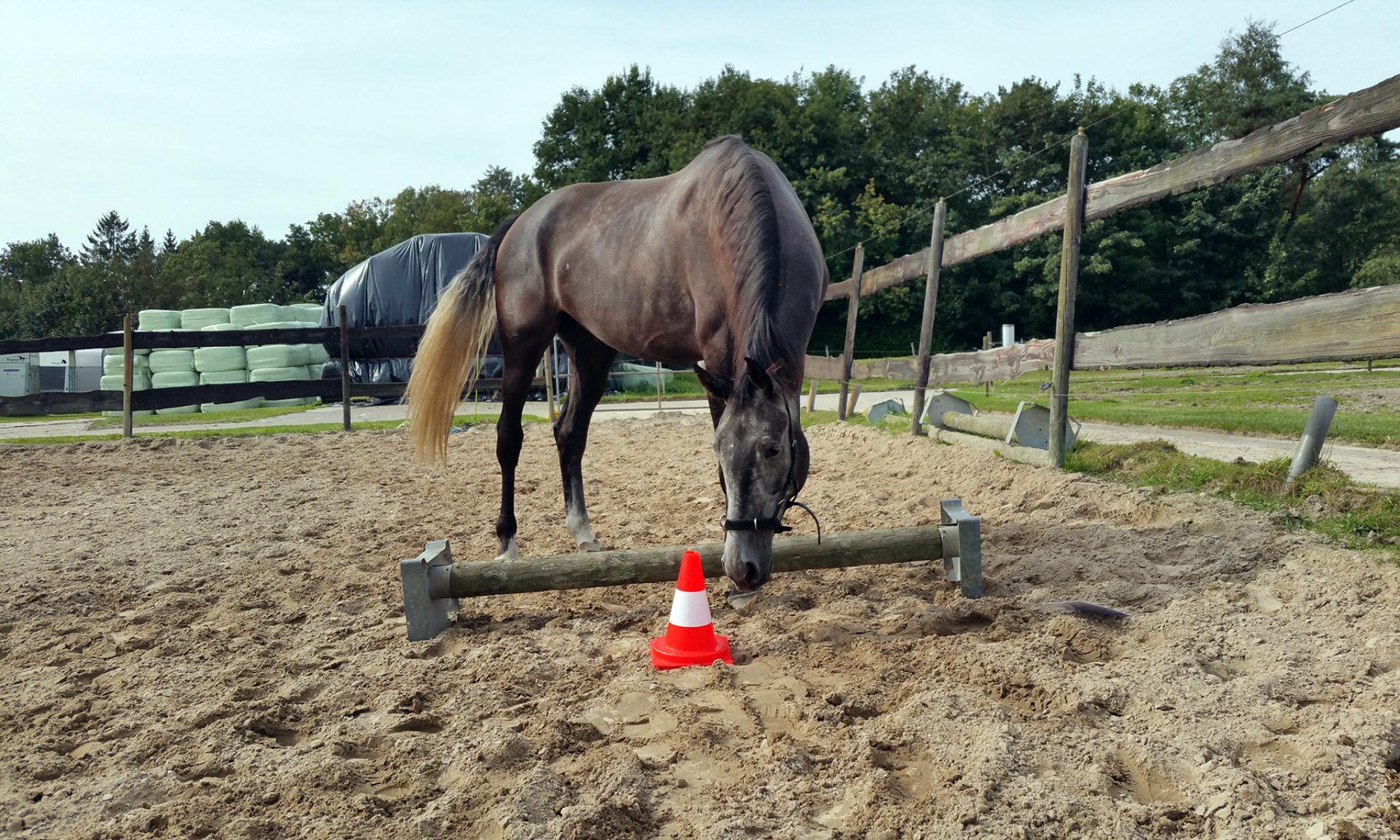 Equine Awareness Centre