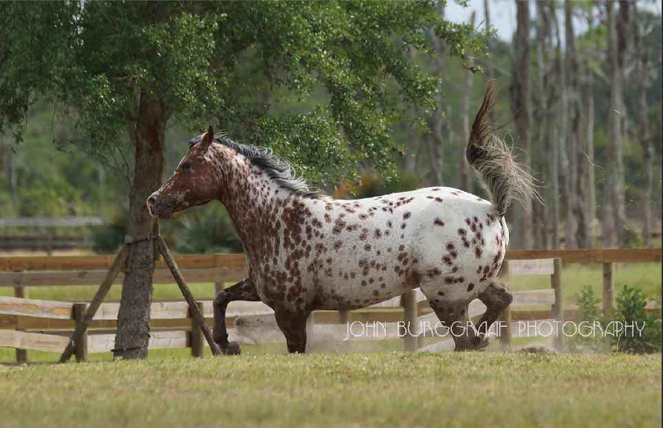 Equine Awareness Centre Merel Burggraaf medium voor paarden paardenmedium healing reading afstandshealing afstand Amerika USA Florida paardengedrag