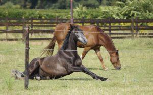 Equine Awareness Centre Merel Burggraaf slaap paardengedrag gedragsdeskundige paard paarden rem