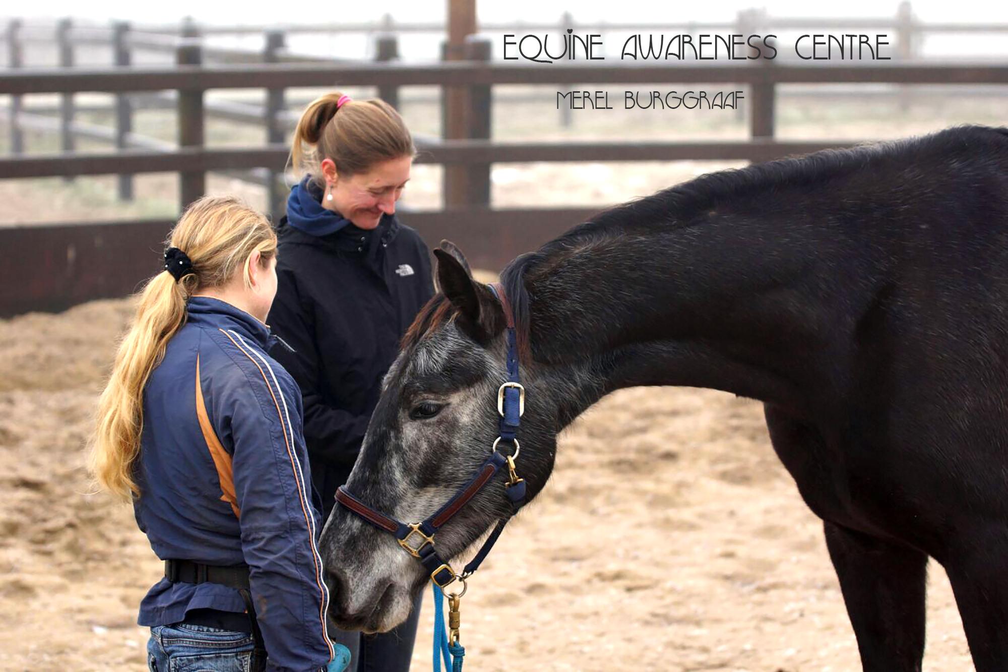 Equine Awareness Centre Merel Burggraaf succes paardentraining hoefsmid clicker training paard paarden Hippie Boy 2