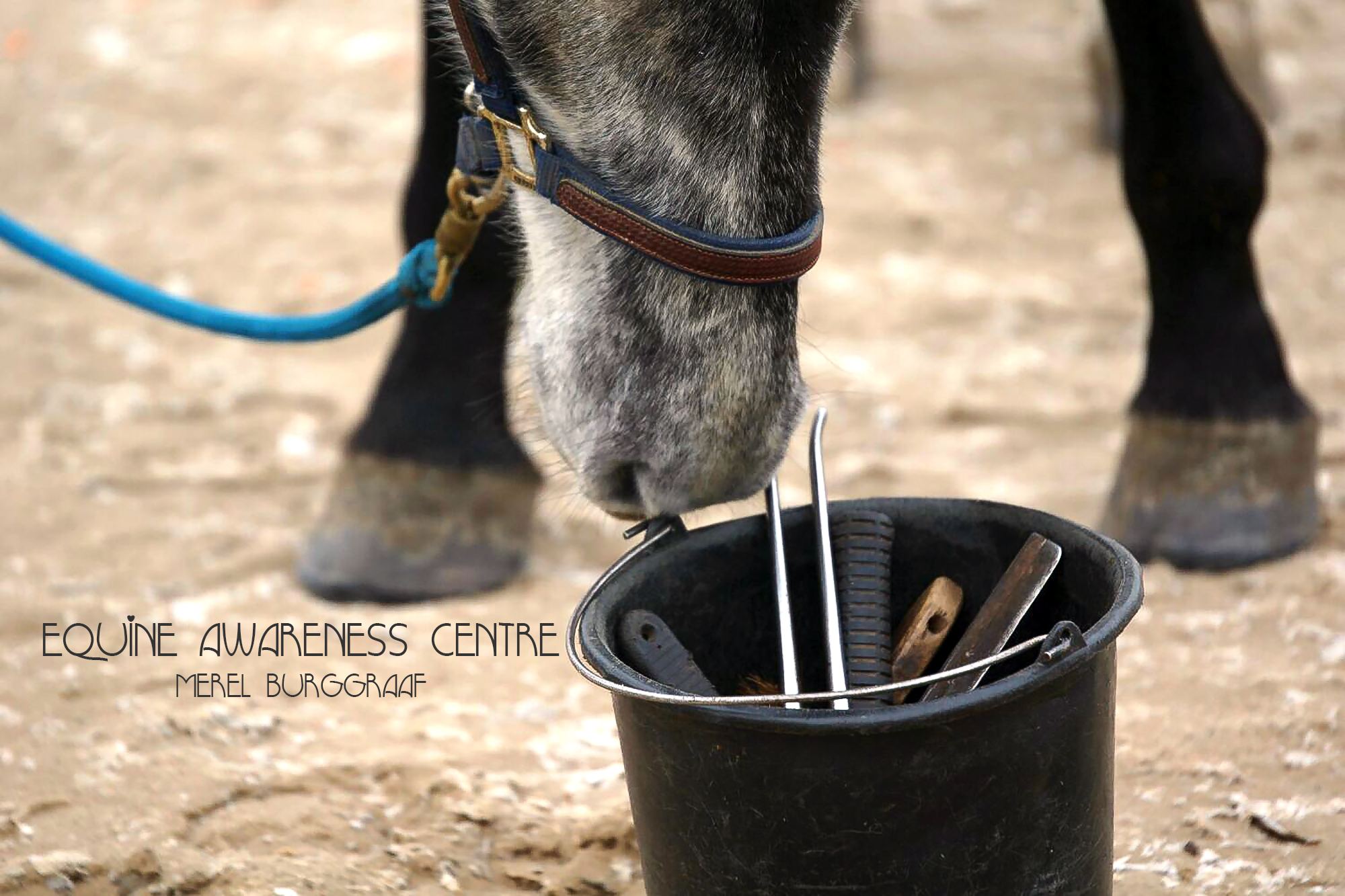 Equine Awareness Centre Merel Burggraaf succes paardentraining hoefsmid clicker training paard paarden Hippie Boy
