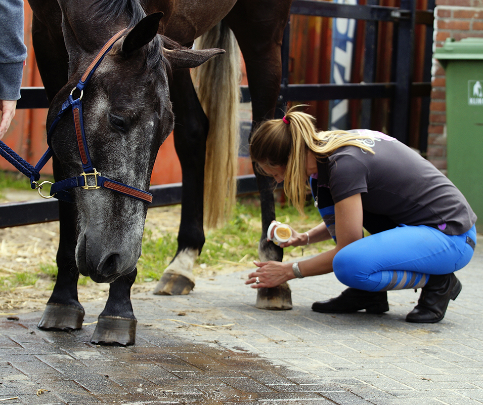 Equine Awareness CentreMerel Burggraaf paardengedragsdeskundige paardengedrag deskundige medium paard paarden equine behaviourist.jpg